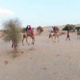 Rajasthan (Akshaardam-Bikaner-Jaisalmer-Jodhpur-Jaipur) Part 3